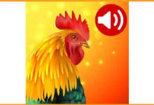 Photo of 150 Free Animals Ringtones, Alarms And SMS Notification For Phones Or Tablets
