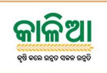 Photo of Odisha Kalia Yojana Website | How To Fill The Farmer Registration Form Online |